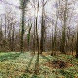 Sonnenstrahlen hinter Bäumen Lizenzfreies Stockfoto