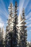 Sonnenstrahlen hinter Schnee bedeckten Bäume lizenzfreies stockfoto
