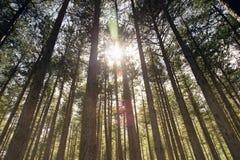 Sonnenstrahlen im Holz Lizenzfreies Stockbild
