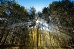 Sonnenstrahlen im Wald Lizenzfreies Stockbild