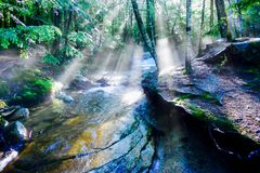 Sonnenstrahlen nach einem neuen Niederschlag lizenzfreies stockfoto