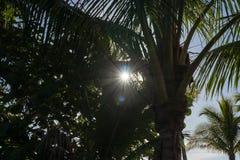 Sonnenstrahlen und bunte Sonnenstellen spähen durch Palmen im motiv stockbilder