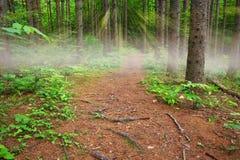 Sonnenstrahlen und Nebel auf einem Weg im Wald Stockfotos