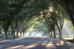 Sonnenstrahlen und Sonnendurchbrüche durch Bäume Lizenzfreies Stockbild