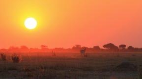 Sonnenuntergang über Afrika - goldene orange Hintergrund-Schönheit und wild lebende Tiere Stockfotografie