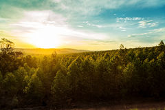 Sonnenuntergang über Bäumen und Hügeln in Südafrika Stockbild