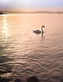 Sonnenuntergang über Balaton See Stockfotos