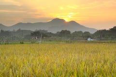 Sonnenuntergang über Bauernhoffeld Lizenzfreie Stockbilder