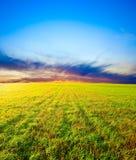 Sonnenuntergang über dem Feld Lizenzfreie Stockbilder