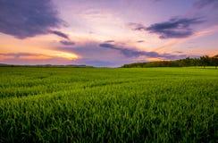 Sonnenuntergang über dem grünen Feld Stockfoto