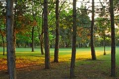 Sonnenuntergang über dem Park im Sommer Lizenzfreie Stockbilder