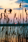 Sonnenuntergang über dem See gesehen durch das Gras Stockfoto