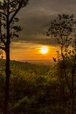 Sonnenuntergang über dem Wald Stockfotos