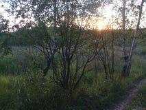 Sonnenuntergang über dem Wald, Birken Lizenzfreies Stockfoto