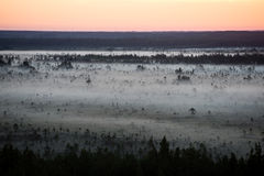 Sonnenuntergang über dem Wald im Nebel Stockfotografie
