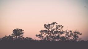 Sonnenuntergang über dem Wald im Nebel - Weinleseeffekt Stockbild