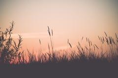 Sonnenuntergang über dem Wald im Nebel - Weinleseeffekt Lizenzfreie Stockfotos