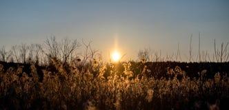 Sonnenuntergang über den Schilfen Lizenzfreies Stockfoto