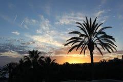 Sonnenuntergang über der Palme Stockfoto