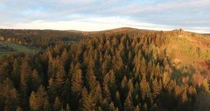Sonnenuntergang über der Waldvogelperspektive stock footage