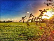 Sonnenuntergang über einem Feld Stockfotografie