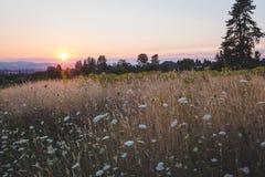 Sonnenuntergang über einem Feld von Blumen Stockfotos