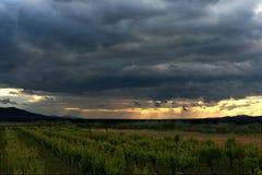 Sonnenuntergang über einem Gebirgsweinberg Lizenzfreies Stockfoto