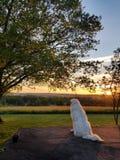 Sonnenuntergang über einem Hundekönigreich lizenzfreies stockbild