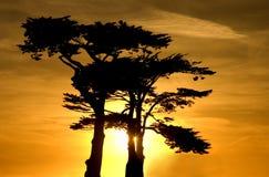 Sonnenuntergang über einer Zypressewaldung in Santa Cruz Lizenzfreie Stockfotos