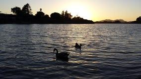 Sonnenuntergang über Ente Stockbild
