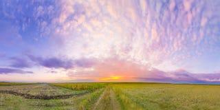 Sonnenuntergang über Feld Stockbild