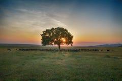 Sonnenuntergang über Feld mit Schafen Lizenzfreie Stockfotografie