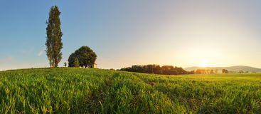 Sonnenuntergang über grünem Weizenfeld mit Weg und Kapelle in Slowakei - Stockbild