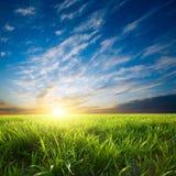 Sonnenuntergang über grünen Getreide Lizenzfreie Stockfotos