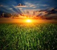 Sonnenuntergang über grüner Wiese Lizenzfreie Stockfotos