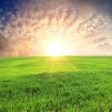 Sonnenuntergang über grüner Wiese Lizenzfreie Stockfotografie