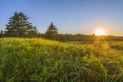 Sonnenuntergang über grasartigem grünem Feld Lizenzfreie Stockbilder