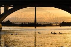 Sonnenuntergang über gudianas Fluss mit Enten Stockfotografie