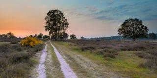 Sonnenuntergang über Heide auf Utrechtse-heuvelrug lizenzfreie stockfotografie