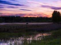 Sonnenuntergang über Kühen auf einem nebeligen Gebiet Stockfotografie