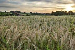 Sonnenuntergang über Kornfeldern Lizenzfreies Stockbild