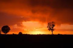 Sonnenuntergang über landwirtschaftlichem grünem Feld - August 2016 - Italien, Bolo Stockbild