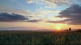 Sonnenuntergang über landwirtschaftlichem grünem Feld - Zeitspanne stock video footage