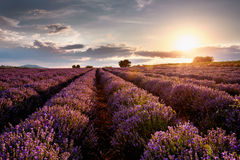 Sonnenuntergang über Lavendelfeld lizenzfreies stockfoto