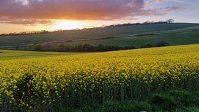 Sonnenuntergang über Rapssamen fängt Modbury Devon Großbritannien auf Lizenzfreie Stockbilder