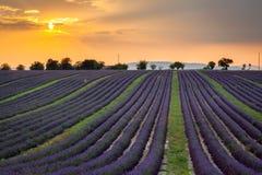 Sonnenuntergang über Reihen des Lavendels nahe Valensole, Provence, Frankreich Lizenzfreies Stockfoto