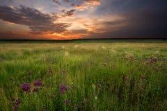 Sonnenuntergang über Sumpfland Stockbilder