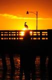 Sonnenuntergang über Vogel auf Pier stockfotos
