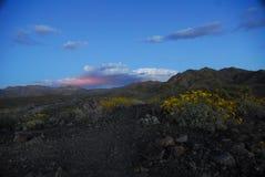 Sonnenuntergang über Wüstenblumen stockfotografie