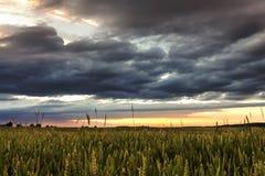 Sonnenuntergang über Weizenfeld Stockfotos